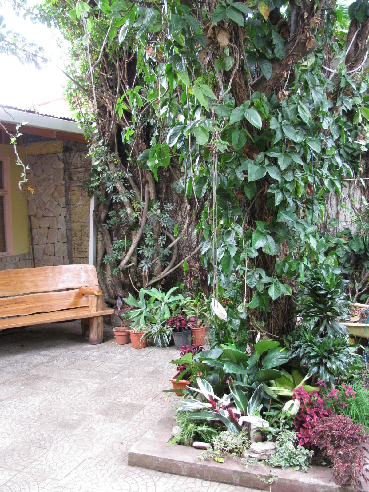 Indoor tropical patio