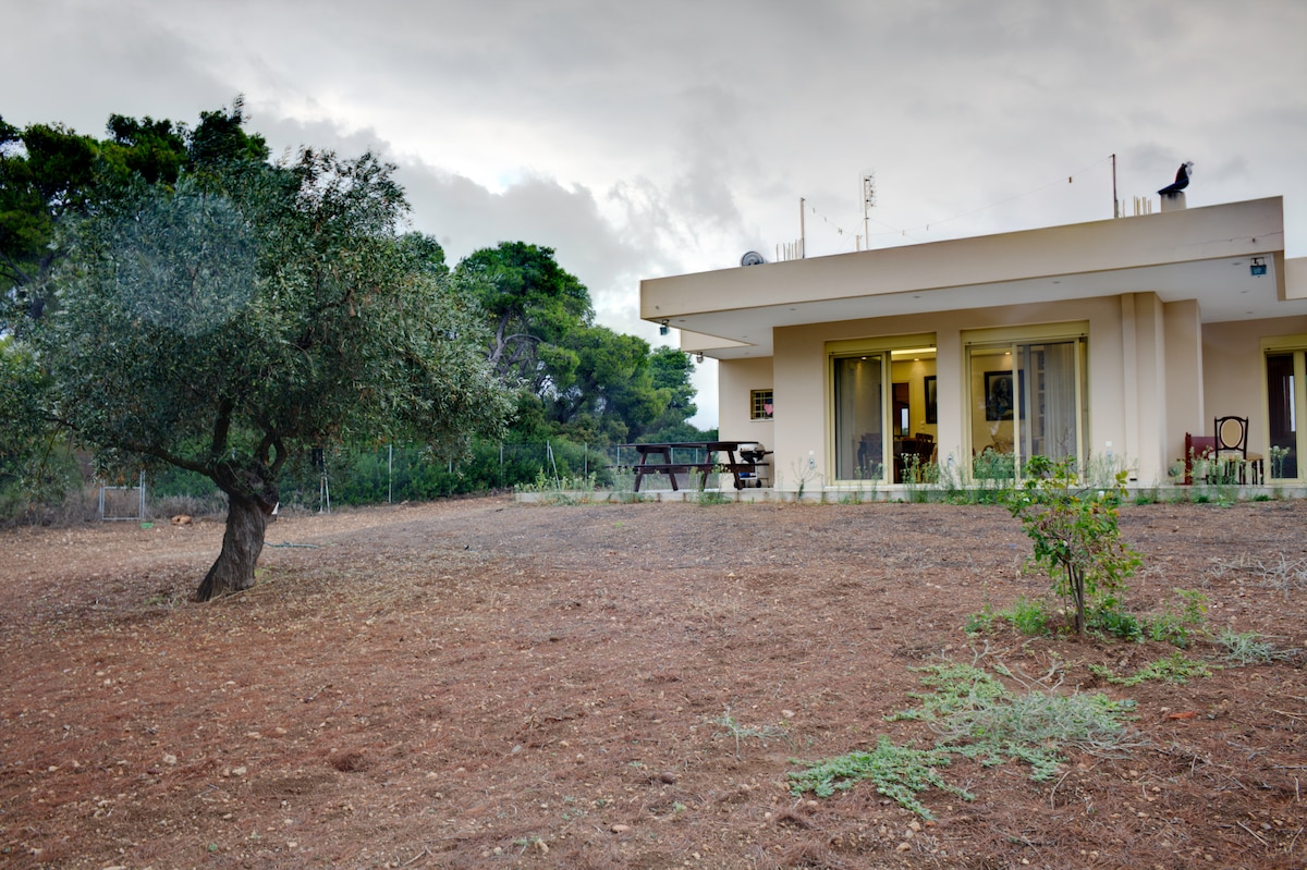 Your private dream house surrounded by the beautiful greek woods.