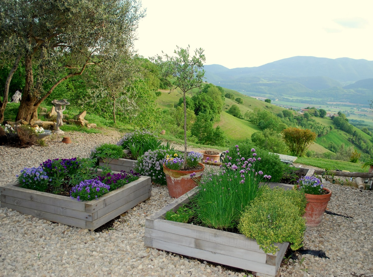 Herb boxes and the view