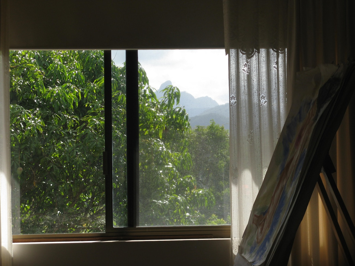 Yes, if you peer through the mango tree you can see Mount Warning.