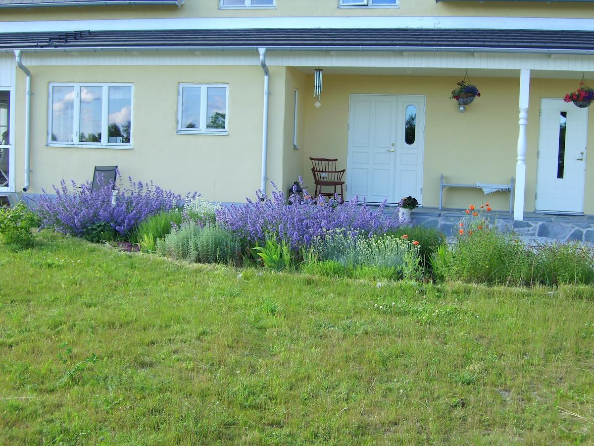 Lavender and catnip in bloom at Avonlea