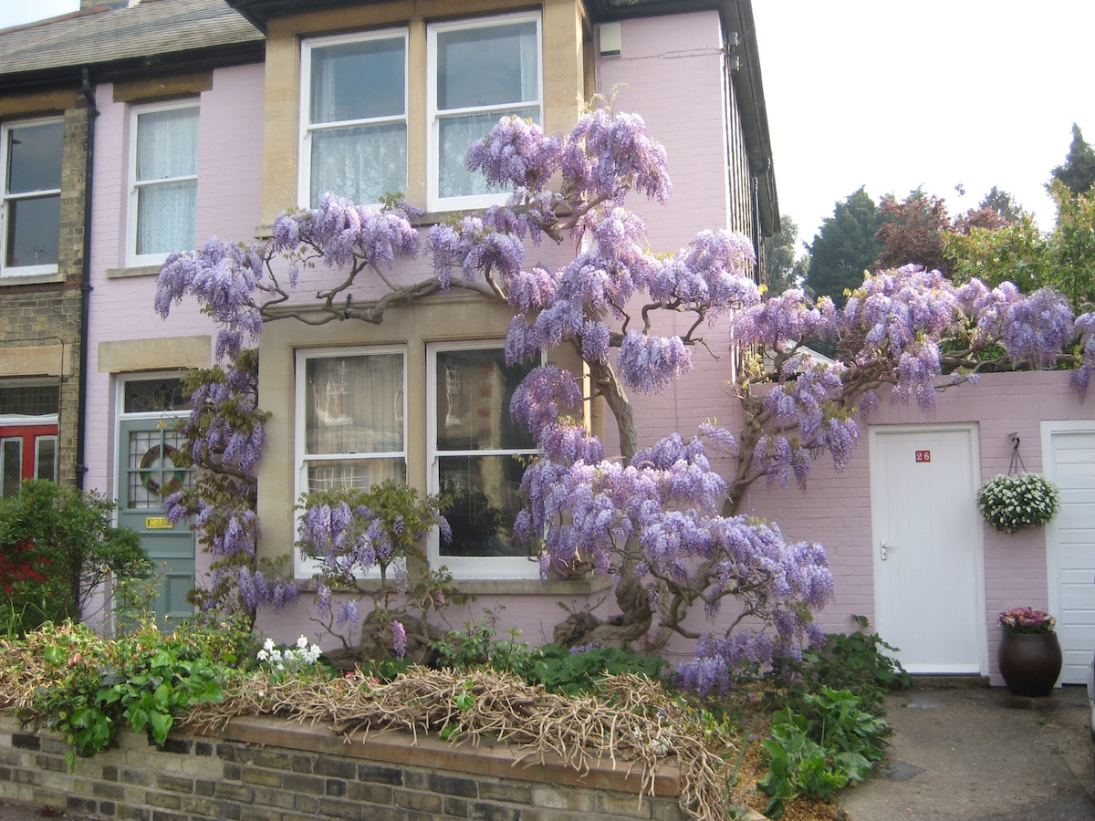 Wisteria in the Spring. The scent fills the Road.