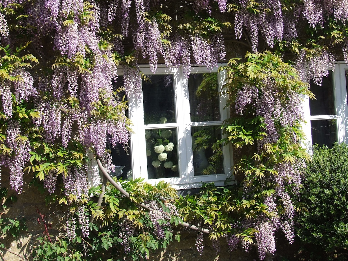 The front of the house when the wisteria is out in May