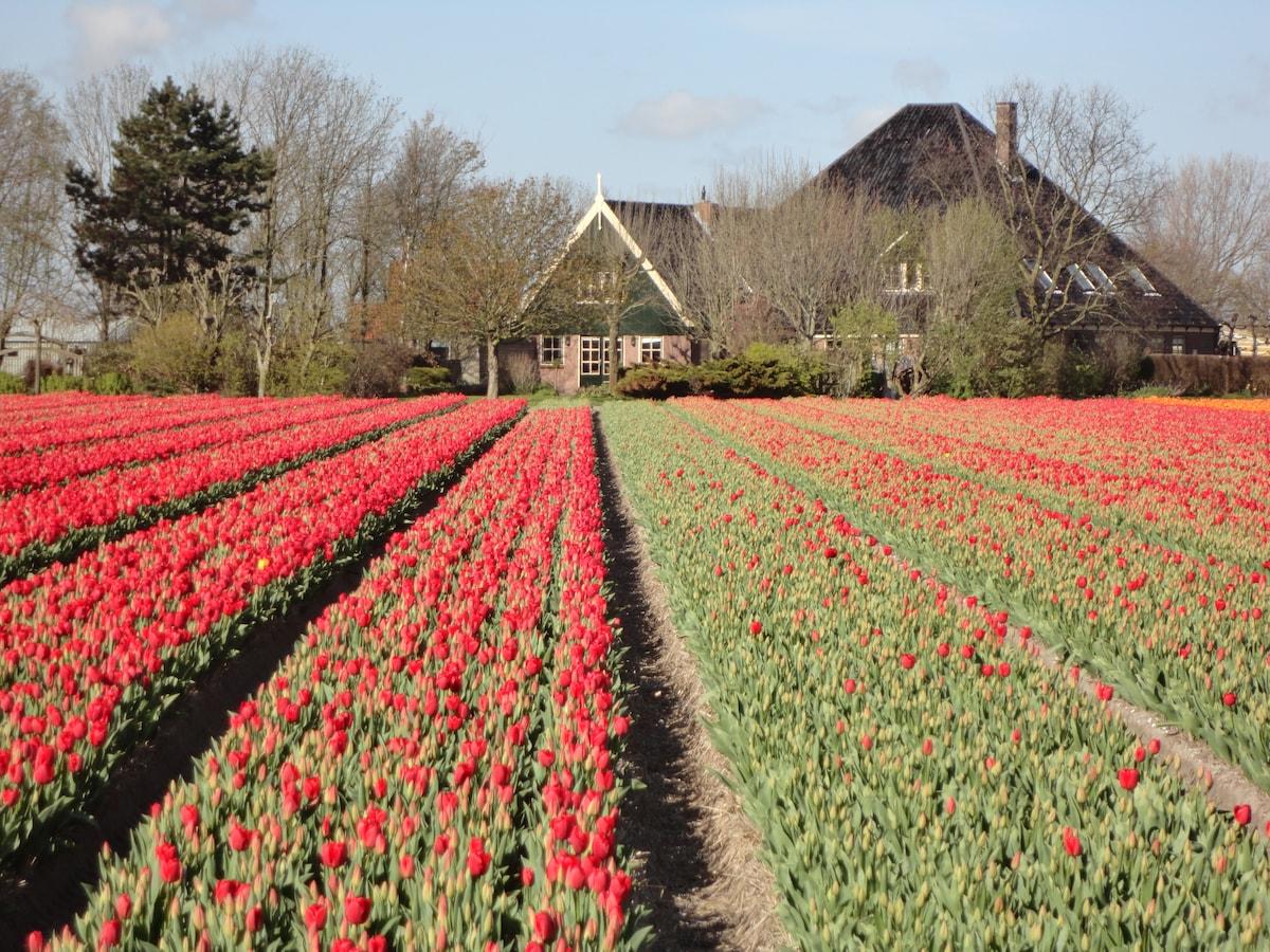 Springtime in the beautiful surroundings of Alkmaar