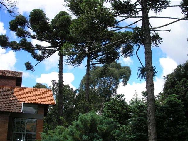 O jardim rico em espécies nativas, (erva -mate, guabiroba) Macieira, limoeiro, bergamoteira e vários  tipos de pinheiros e araucárias. .