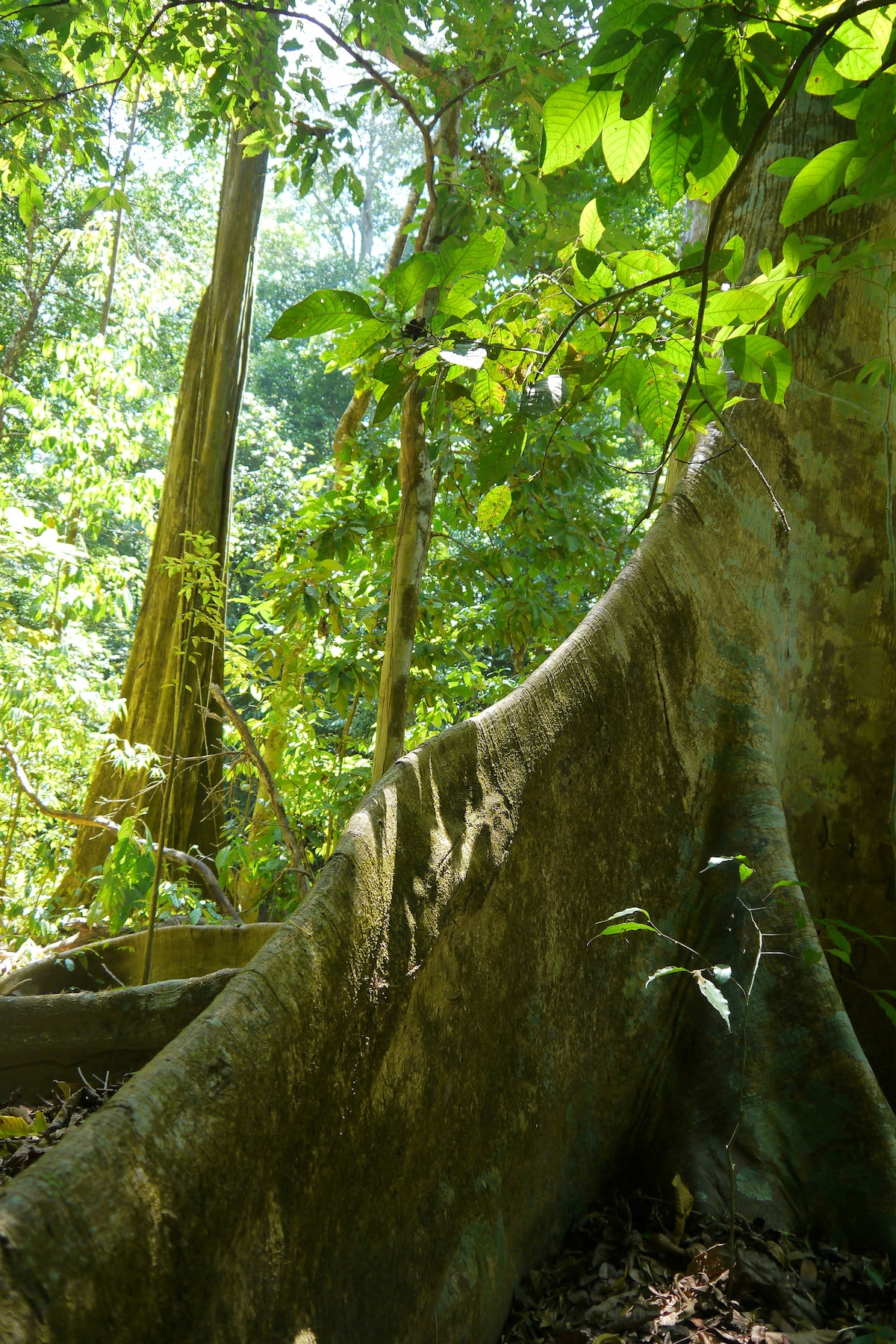 Jungle hikes are just steps away from Cabinas Ola Mar ( olamarcr [dot] com ).