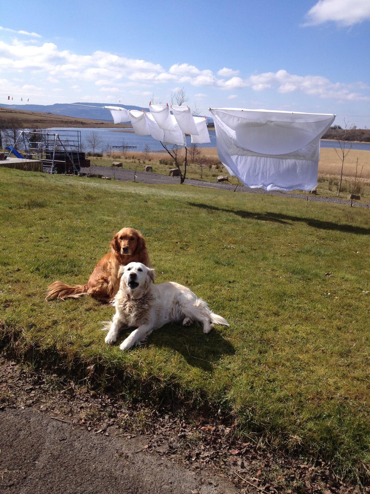 Bailey and Stella enjoying the sun