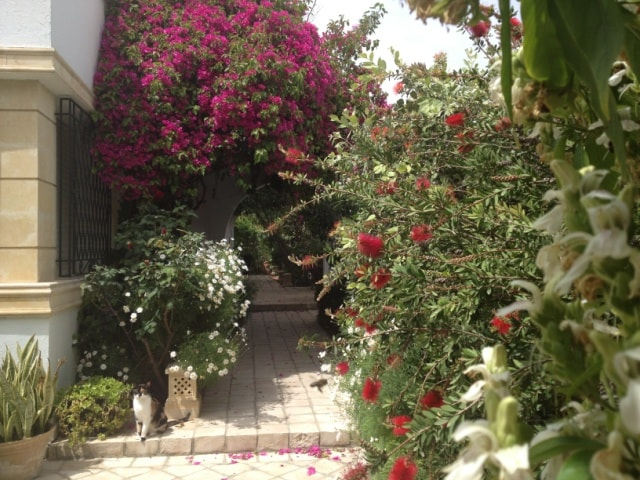 Calme et verdure à Tunis