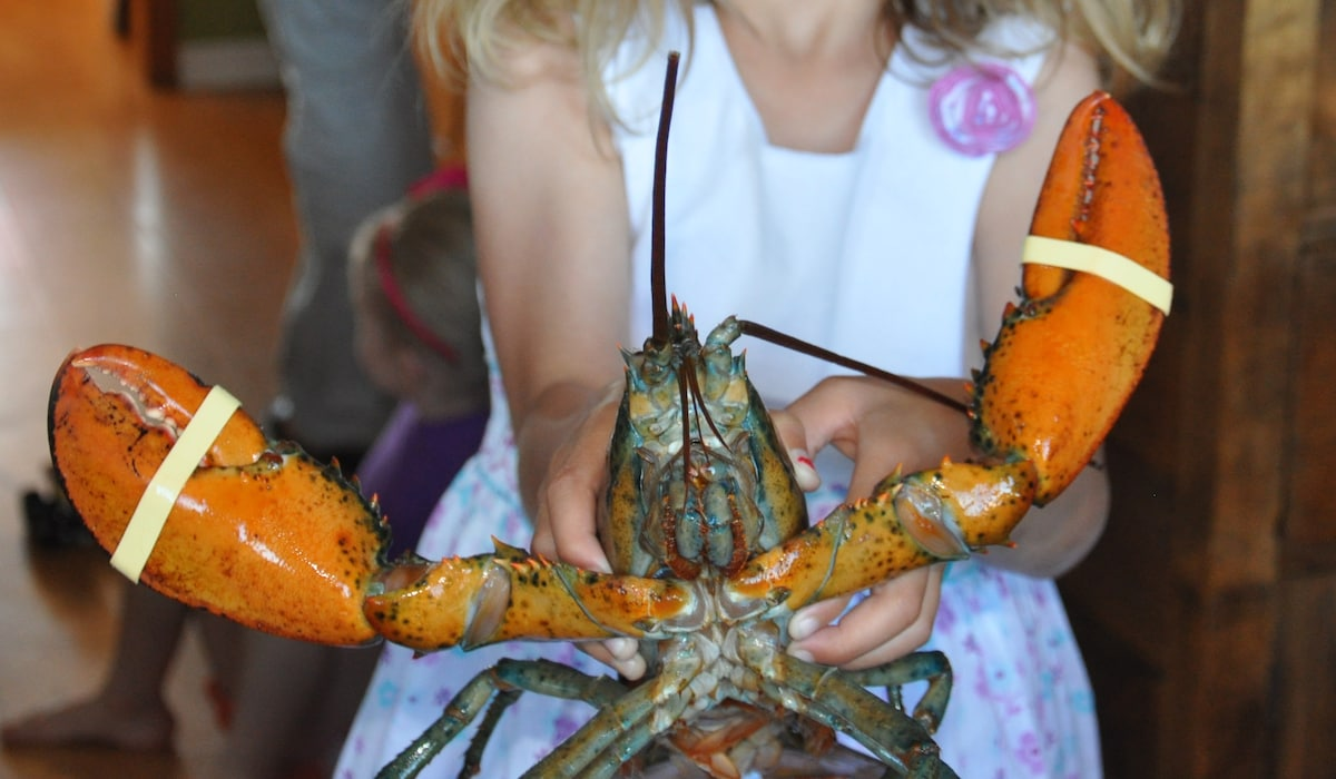 Lobster Season! (May 15th to July 15th in our area but available all year long)