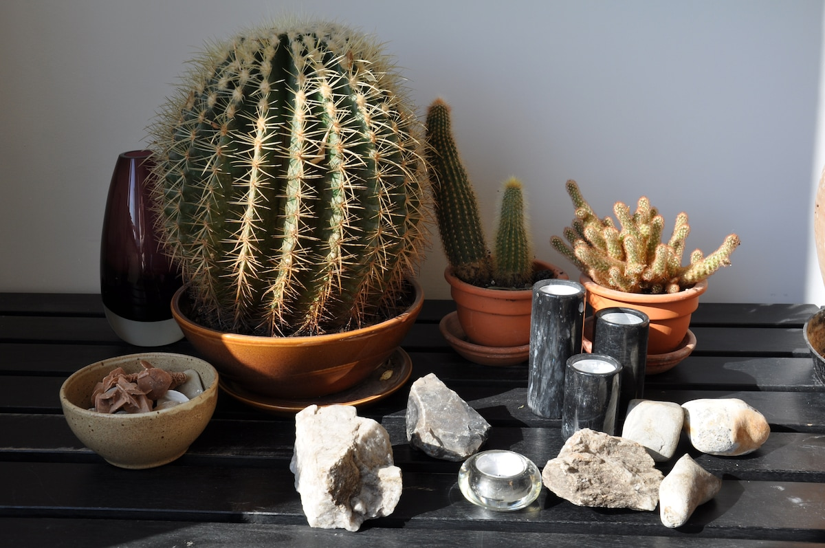 our cactus collection and stone souvenirs