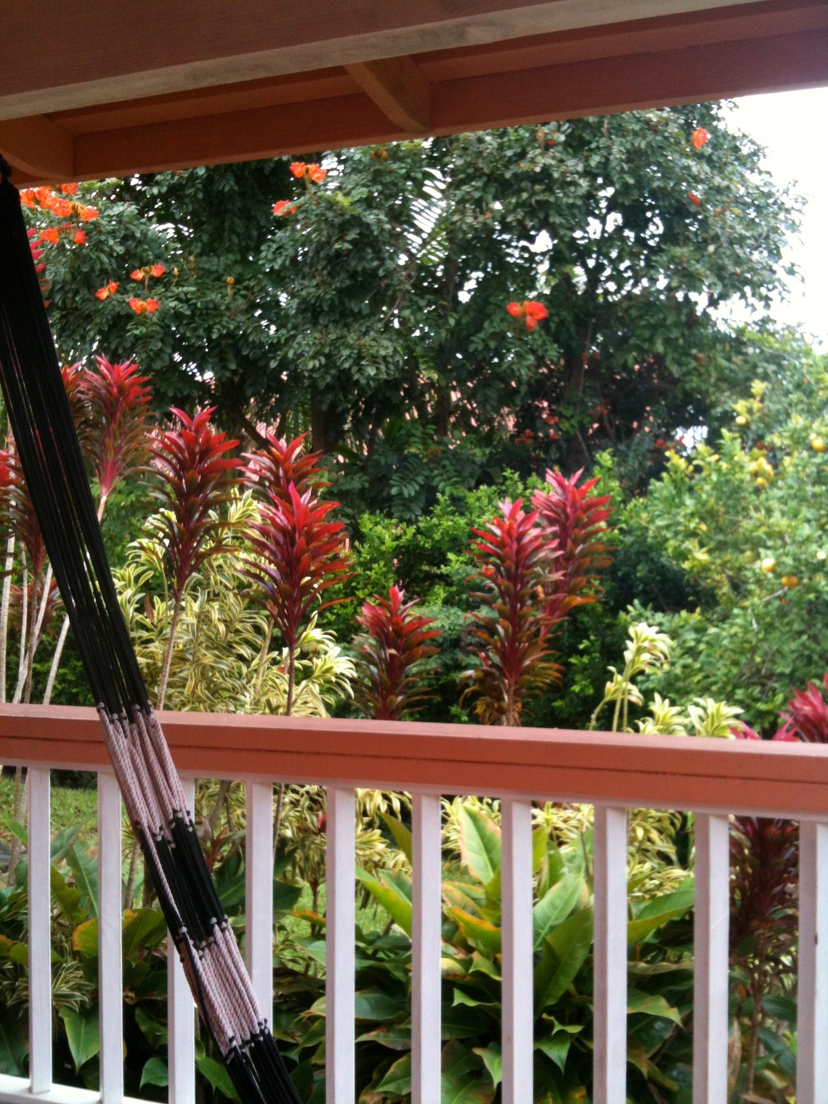 Swing from the hammock on the lanai.