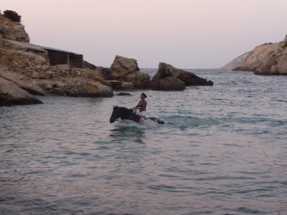 Swimming with the horses at the beach