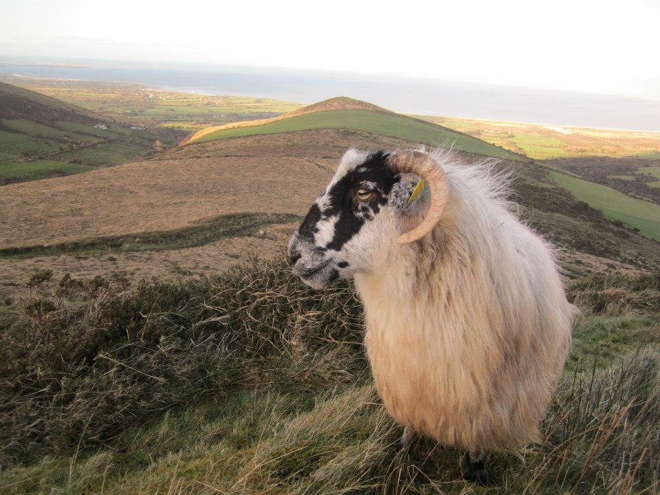 Gleann na nGealt, Sheep Farm Accomm