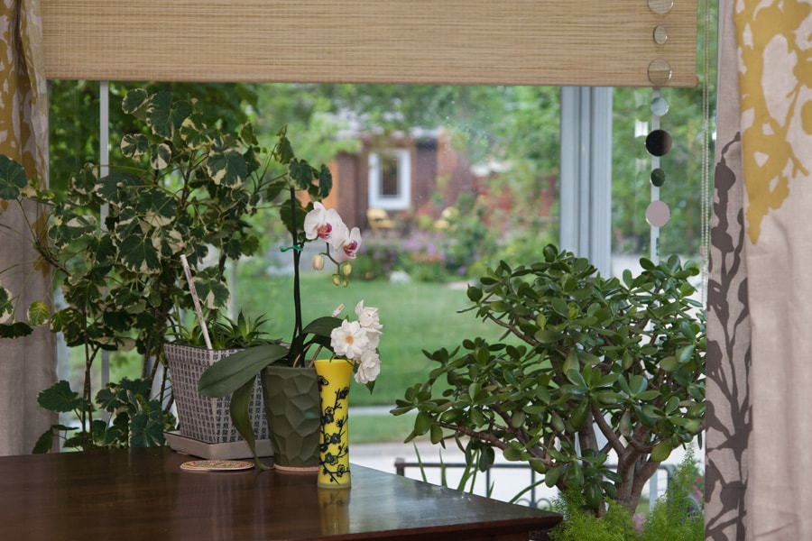 View from kitchen table