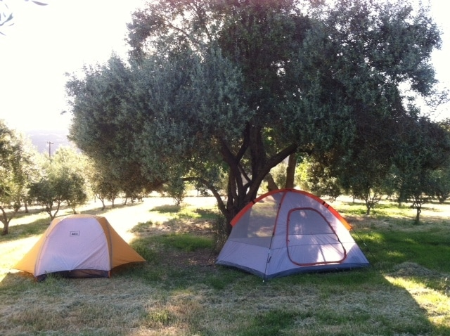Camping in Olive Orchard at Farm