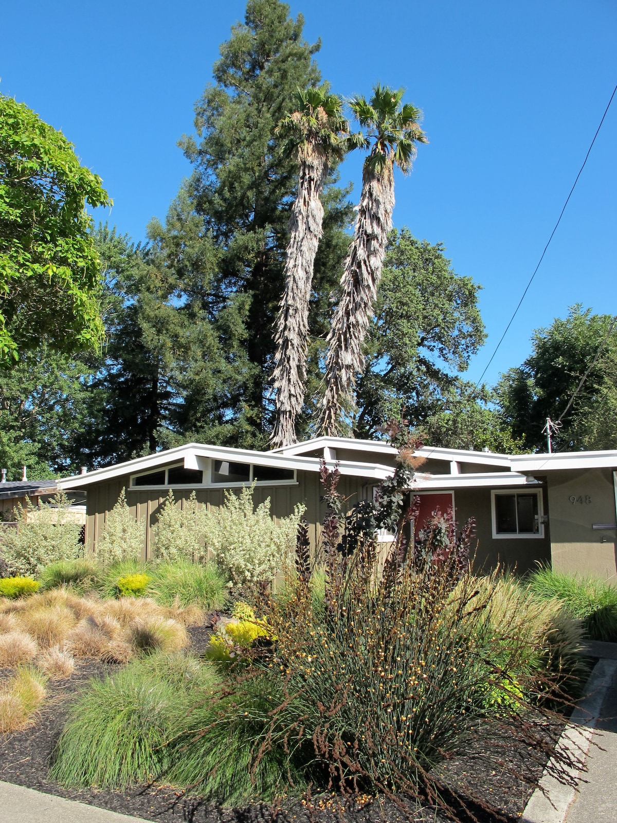 The Madrone House