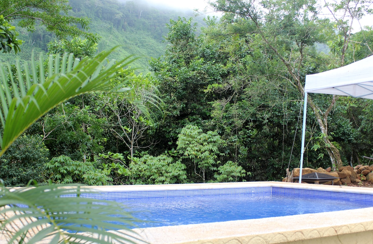 Jungle view from Pool