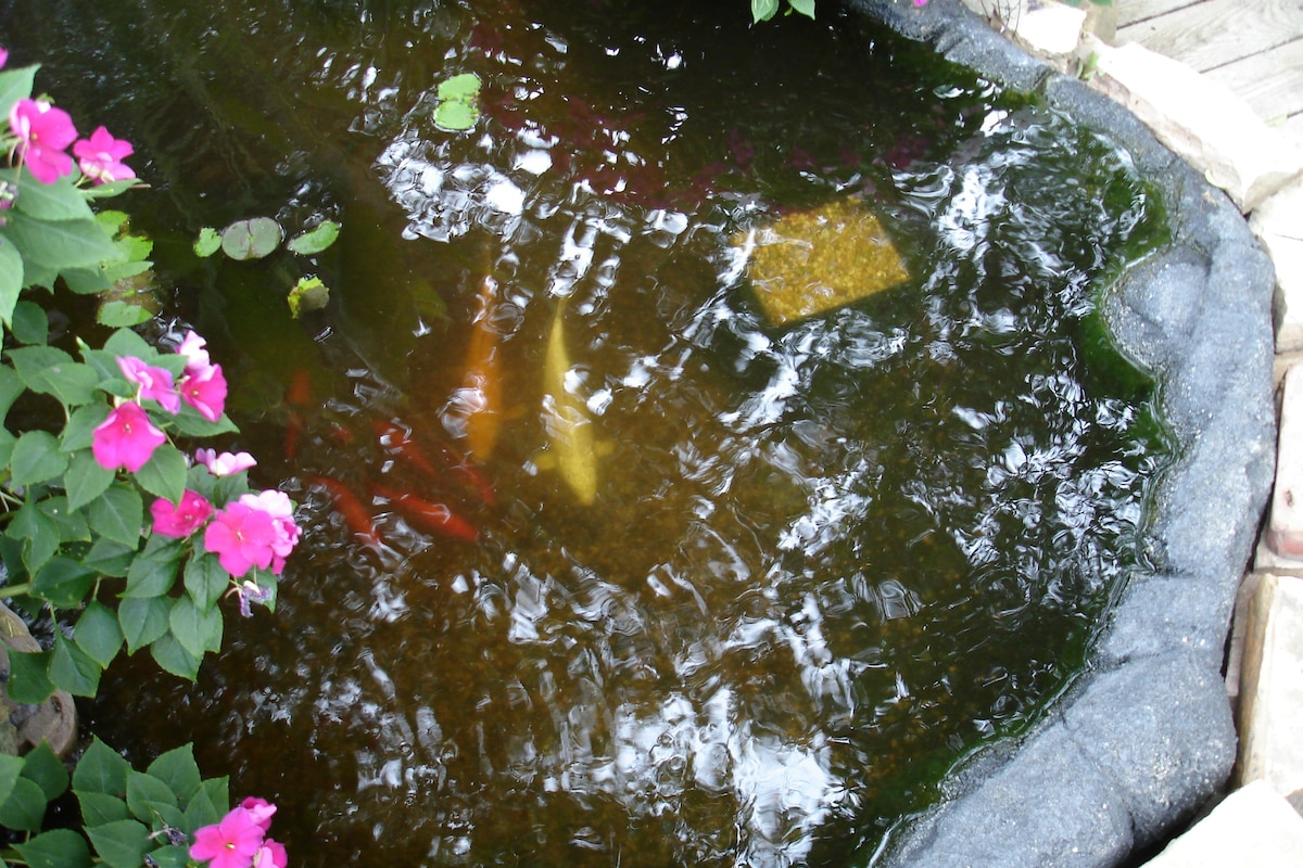 Share moments of serenity near our Koi pond and gardens.