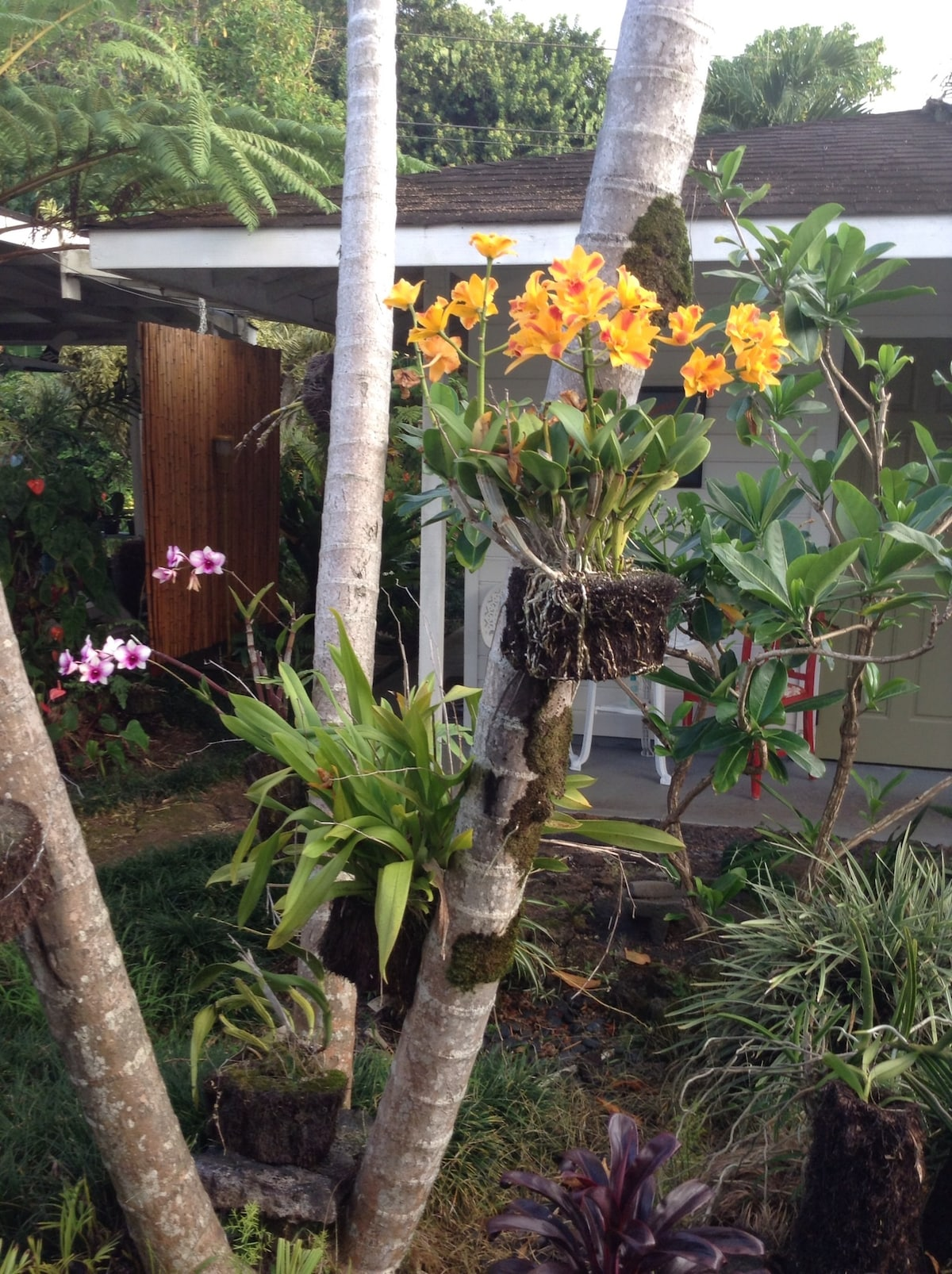 Blooming orchids near cottage entrance