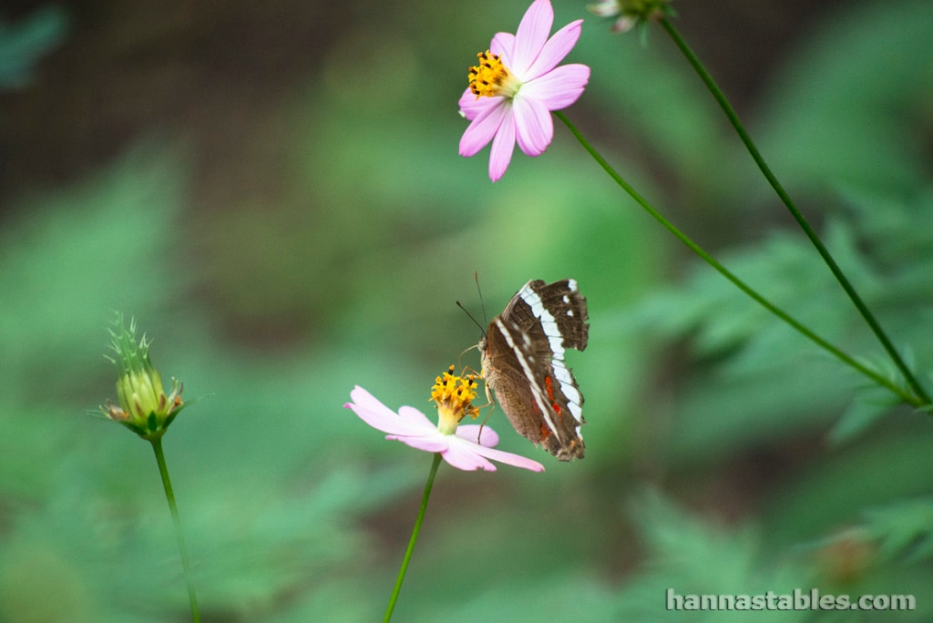 Lots of wildlife such as butterflies and birds frequent the property.