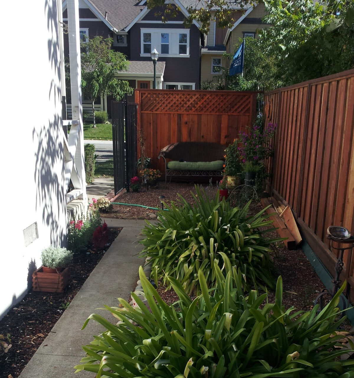 Side Yard now has many more plants!