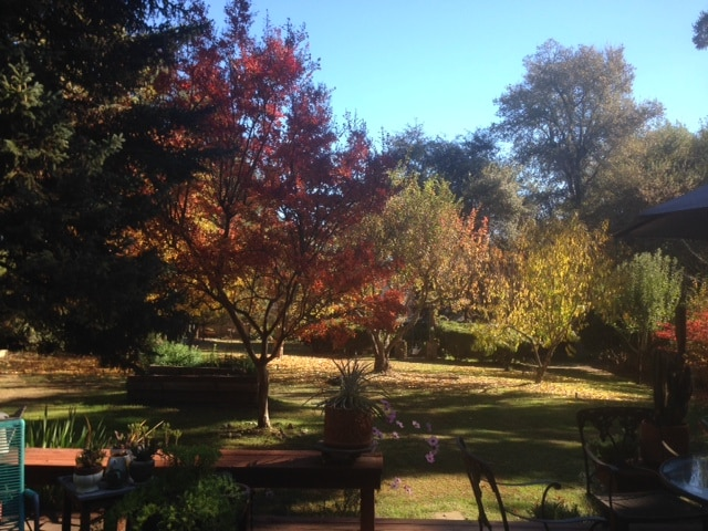 Back garden view in Autumn