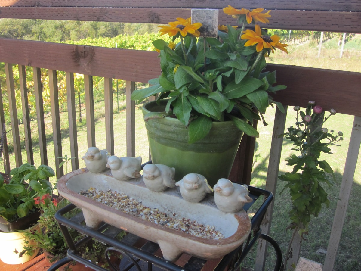 Birds feeders bring a flock of all kinds to watch.