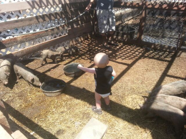 Ruff Life Ranch was a working pig and chicken ranch! The animals are gone but we still have pens if you want to bring your hooved friends!