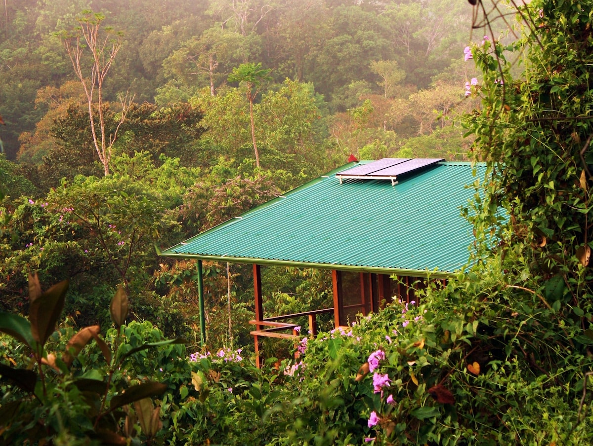 This solar powered home is in the middle of the jungle. Wildlife surrounds the home!