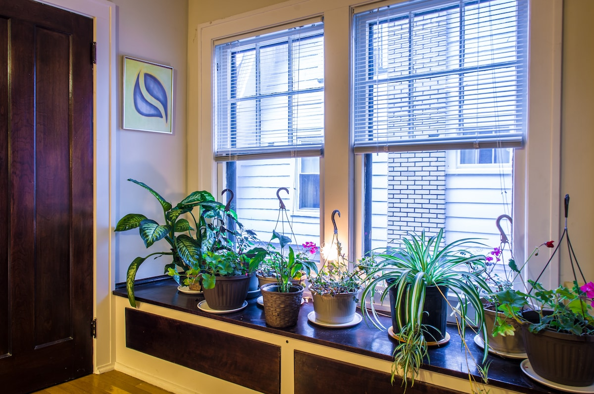 Plants in the window in winter only though. Summertime they go outside.