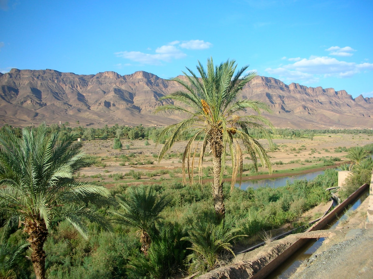 Discover the beauty of the desert