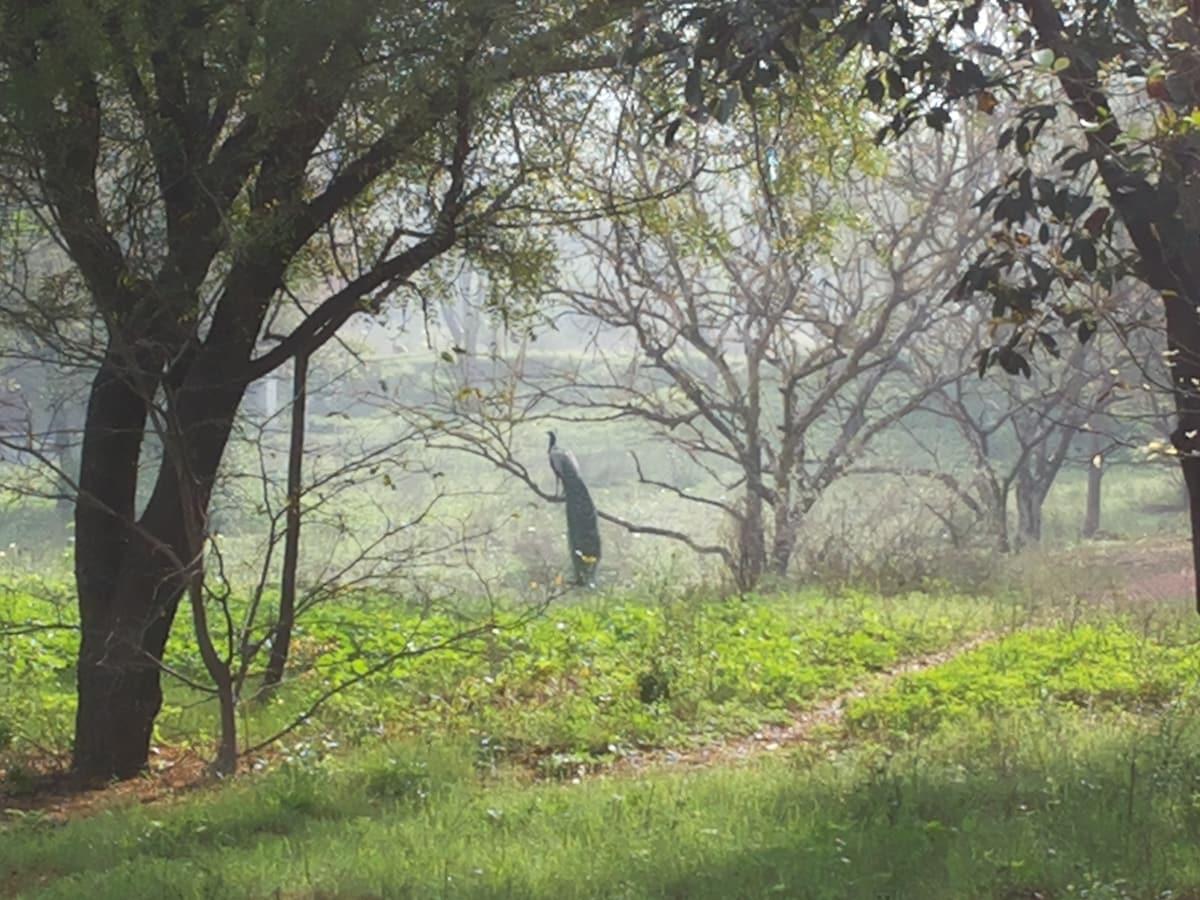 Homestay for women in green Gurgaon