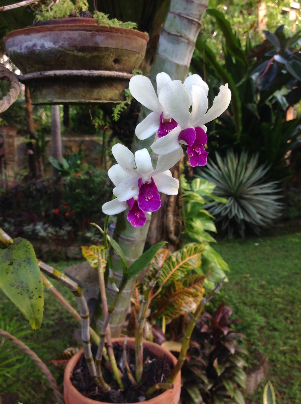 Our orchids :)