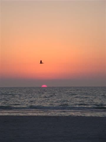 Pelican flying in the sunset