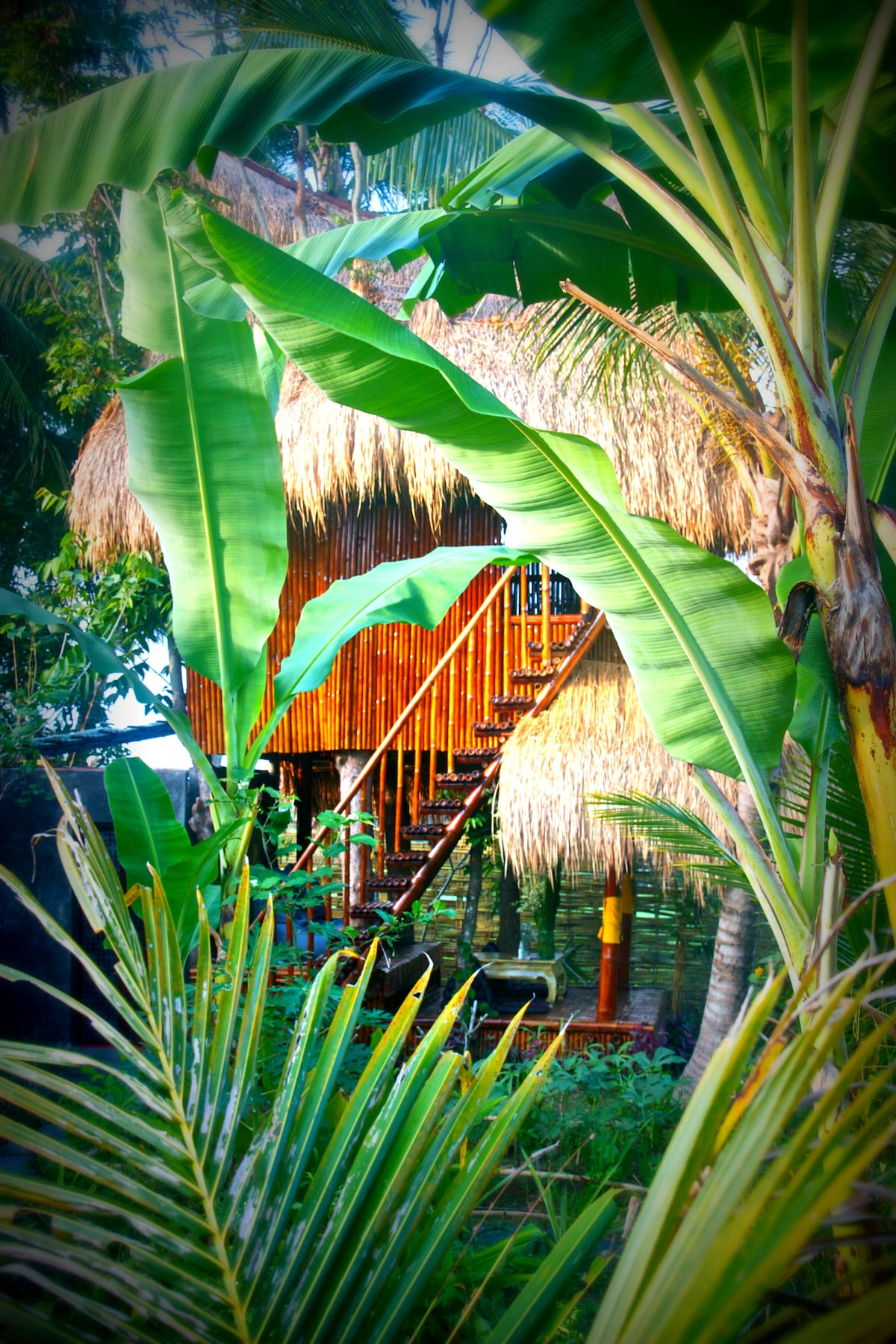 view of the tree house thru the garden