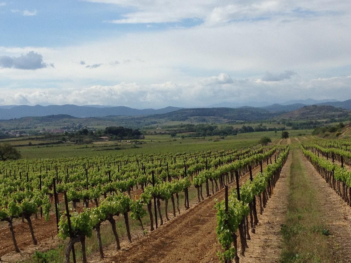 Des vignes à deux pas de la maison - vineyards ! Cheers!