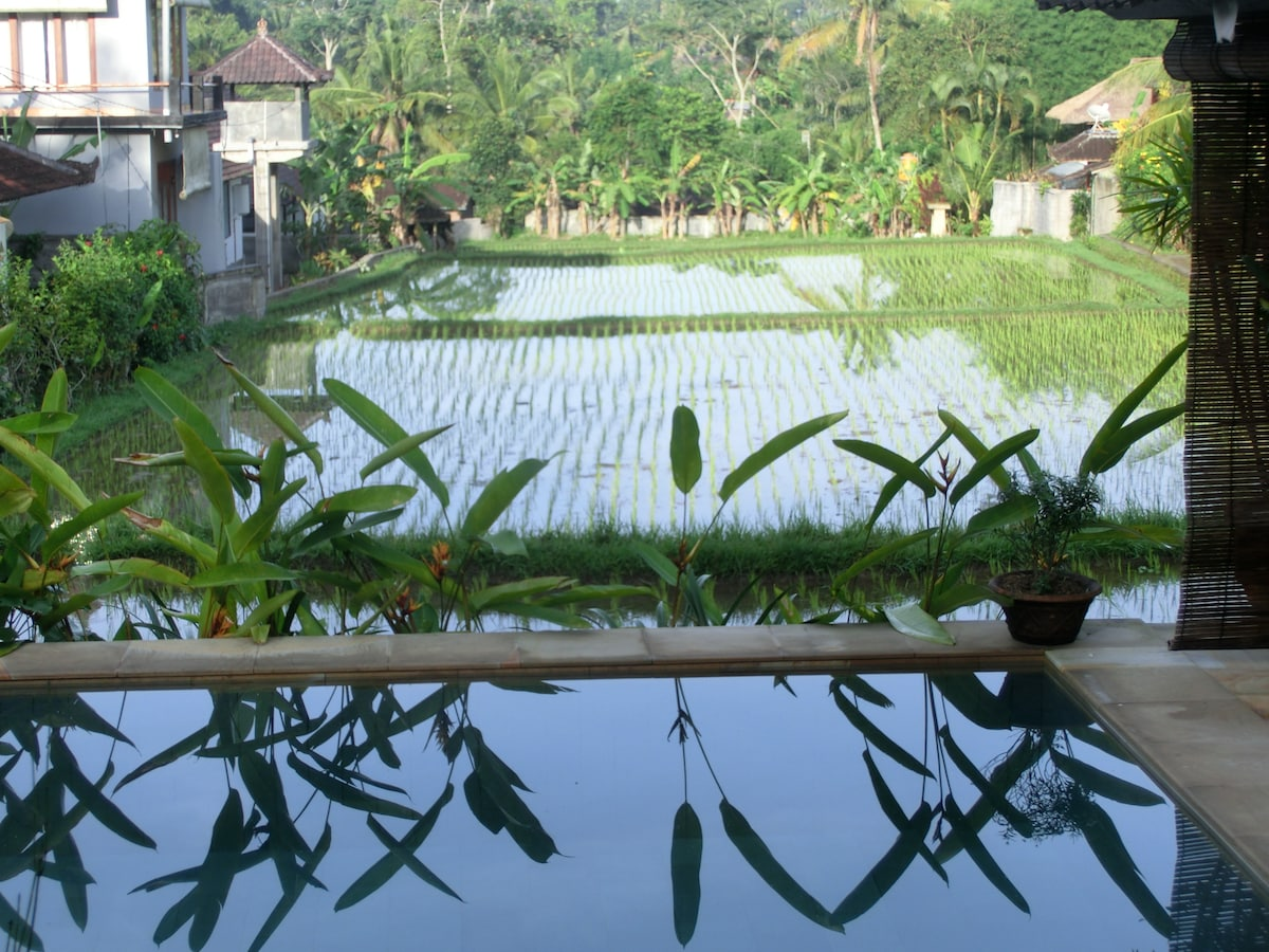 Newly planted ricefield over the pool