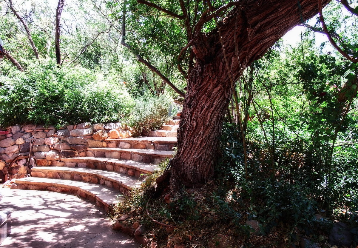 Steps to sit on with a cup of your favorite brew, listening to the sounds of the birds, or walk the short, looped green enshrouded path.