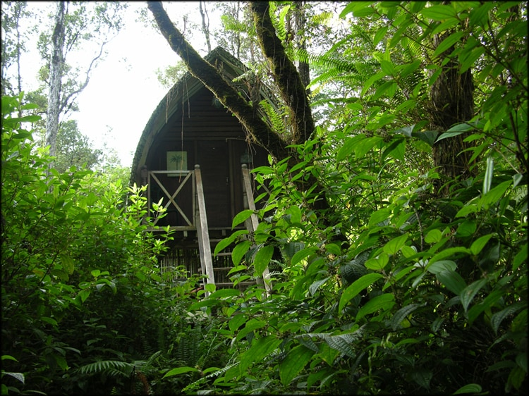 Nestled in an Ohia Forrest.