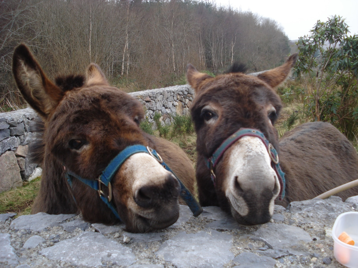 Our Donkeys are  waiting for visitors!!
