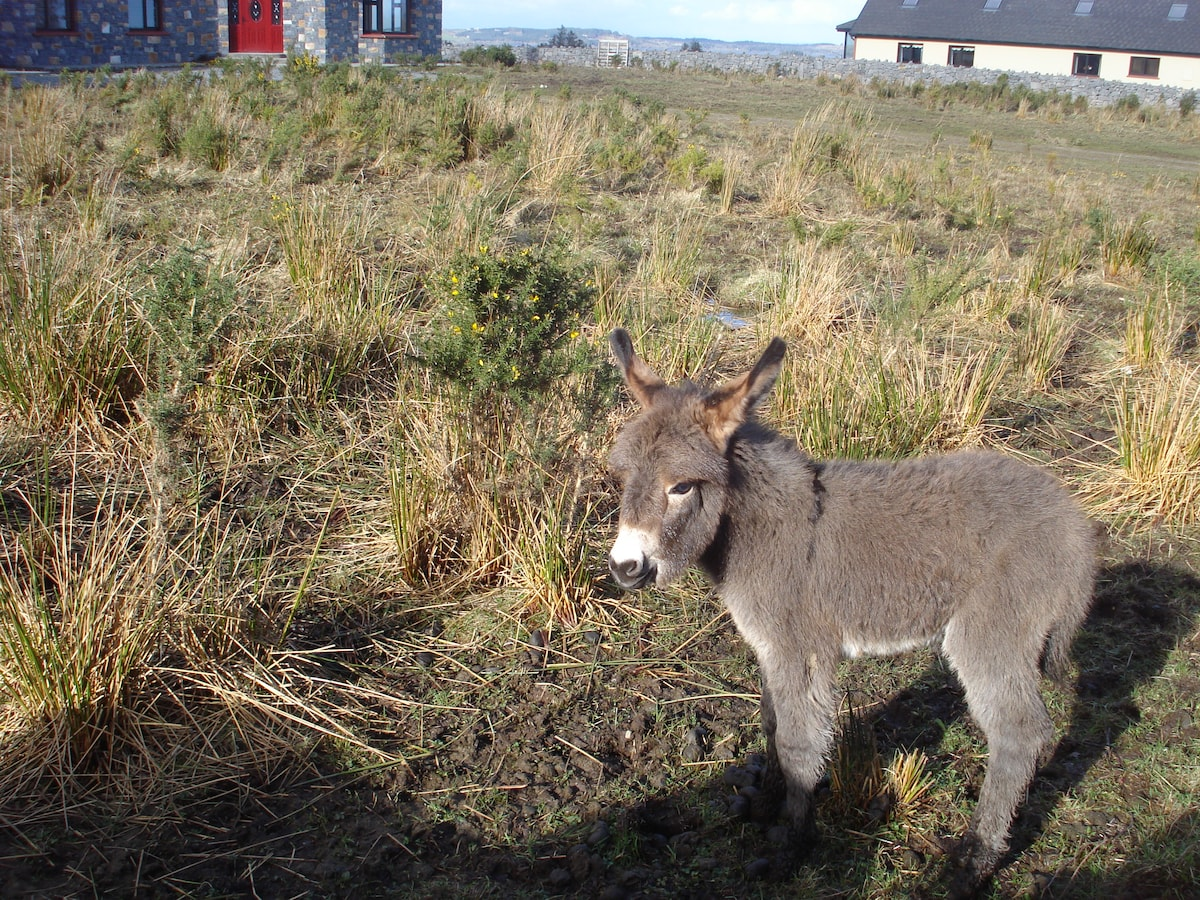 Sandy, the baby donkey. She was 1 year old in March.