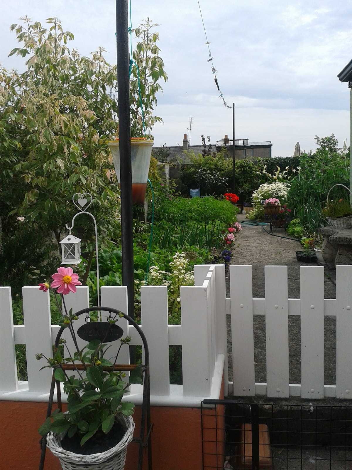 I grow a mix of vegetables and flowers in my small urban garden