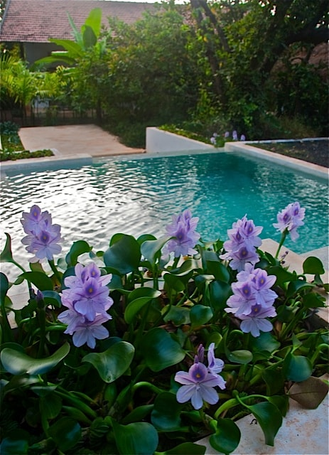 the lounging pools are often the most used spaces