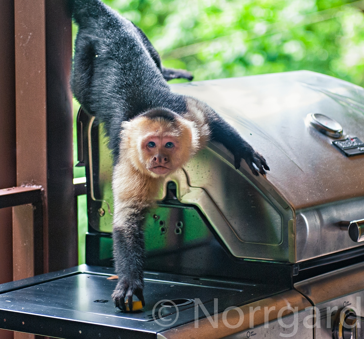 monkeys and other wild life visit on a daily base