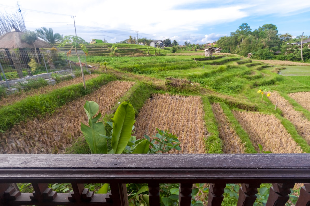 Traditional Bali bungalow ricefield