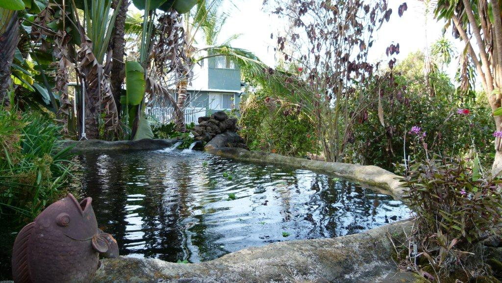 Koi ponds and Crows Nest