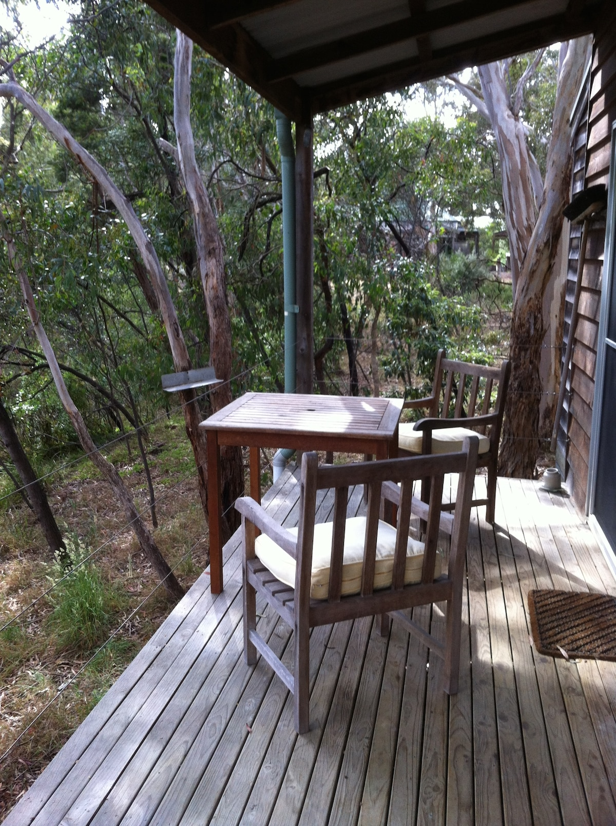 Feed the parrots and possums from the feeders on the trees