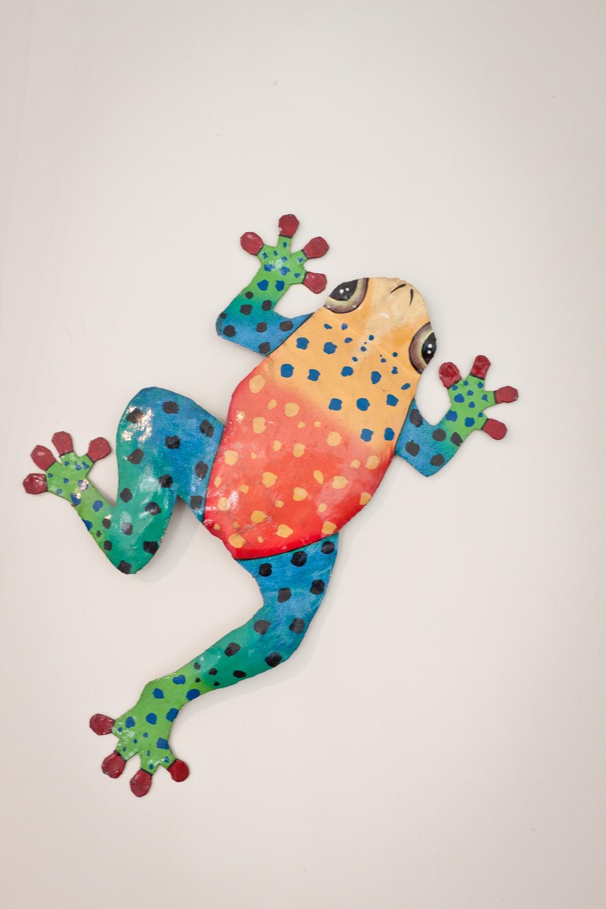 Frog from Haiti