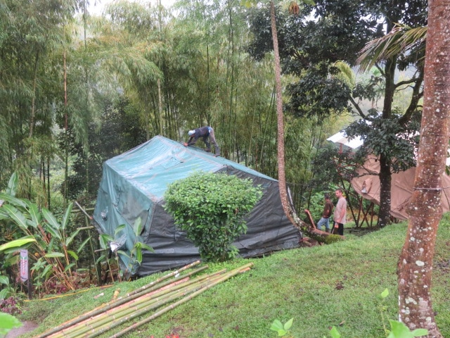 Jungle Terrace Tents