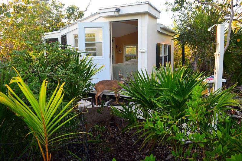 Island Cabin in Key Deer Refuge
